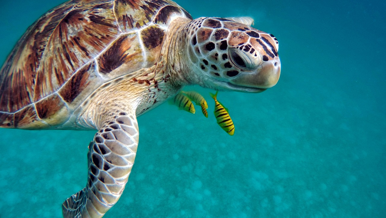 Where to Find Sea Turtles
