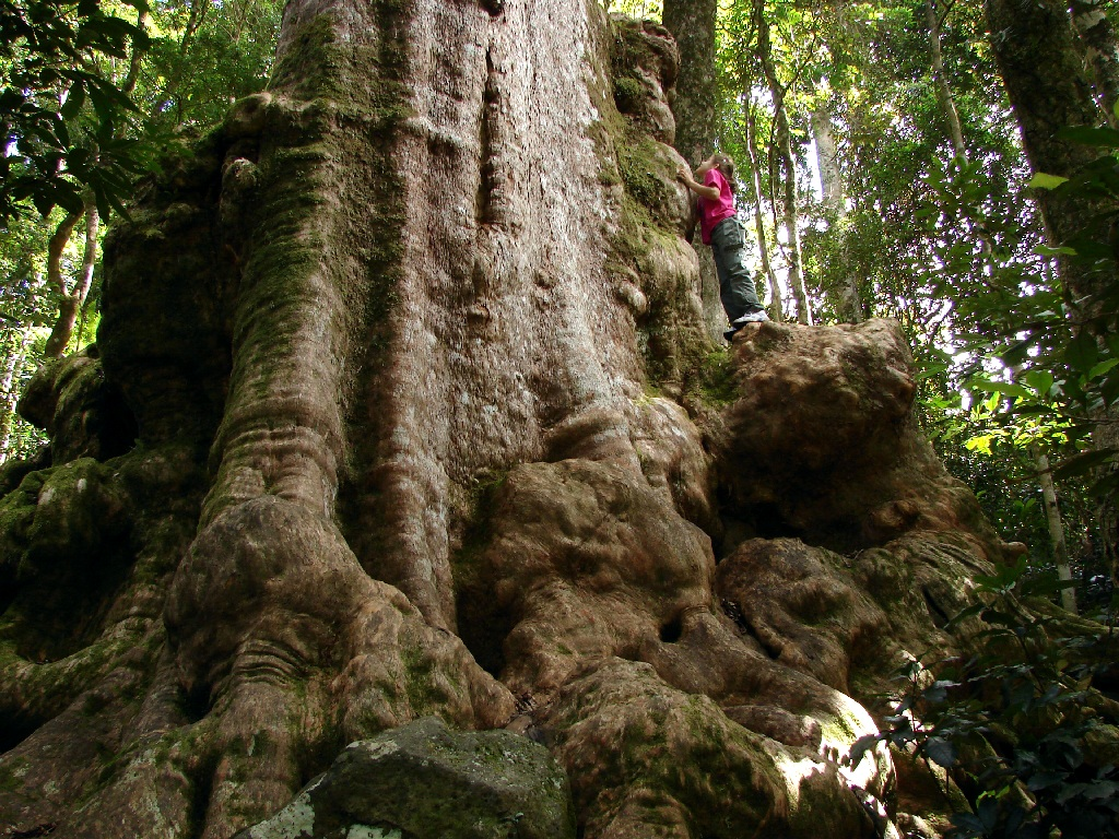 Lamington National Park, magical places in Queensland