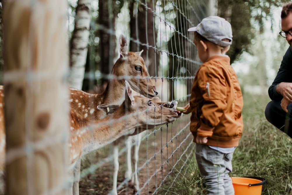 Kid zoo, educational benefits of kids at zoos