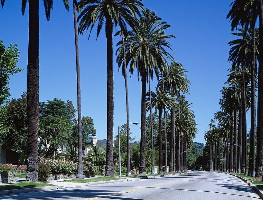 things to do in California, palm trees