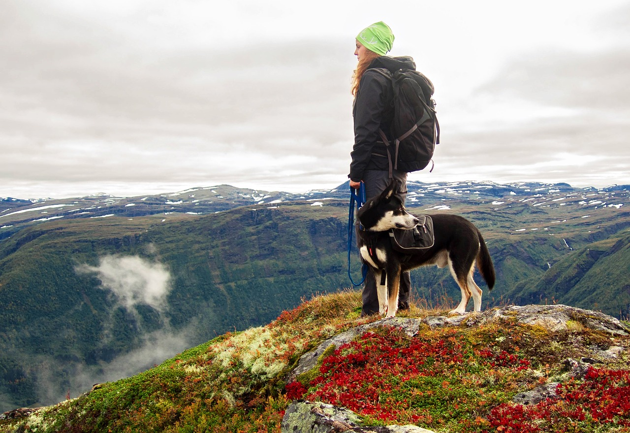 hiking with your pet