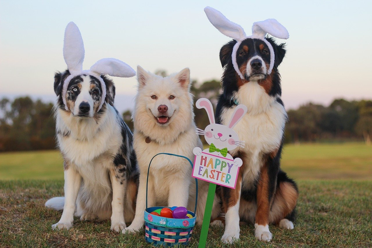 easter gifts for pets